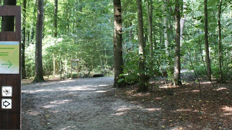 Wegeleitsystem Lehmkuhlenwald und Arboretum