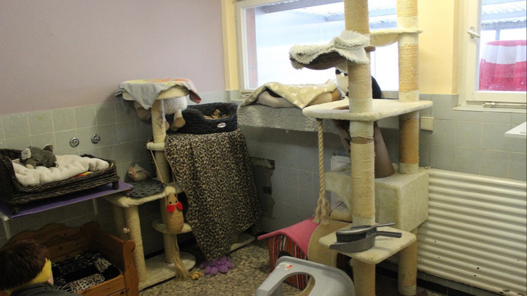 Renovierung Katzenzimmer