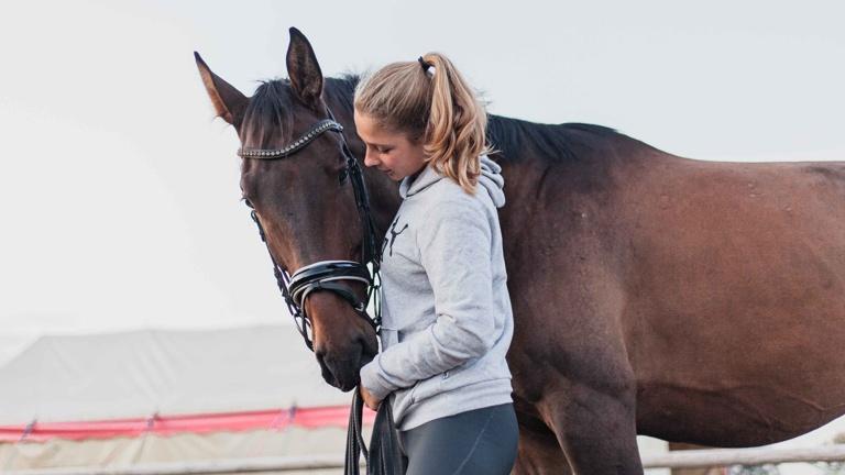 Voltigierpferd für die Lister Ponyschule e.V.