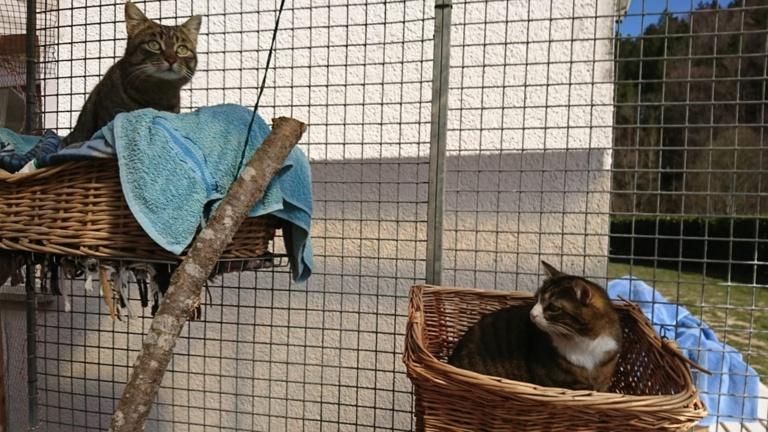 Auffangstation - neues Katzengehege