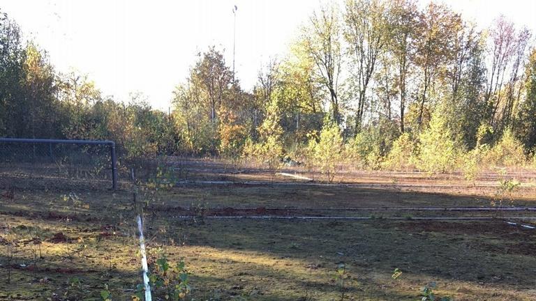 Sanierung Tennisplätze TuS Hachenburg e.V.