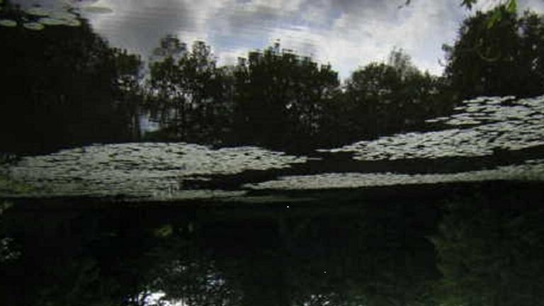Pflege Vereinsgewässer und Lengericher Bäche