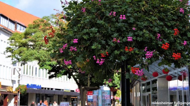 Blumenampeln für Sehnde