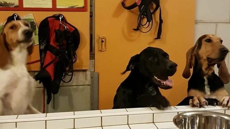 Hundeheim artgerecht ausbauen