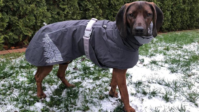 Wintermäntel für Rettungshunde