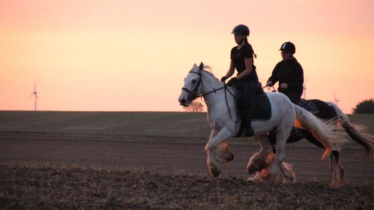 mobile Zäune f. unsere Pferde