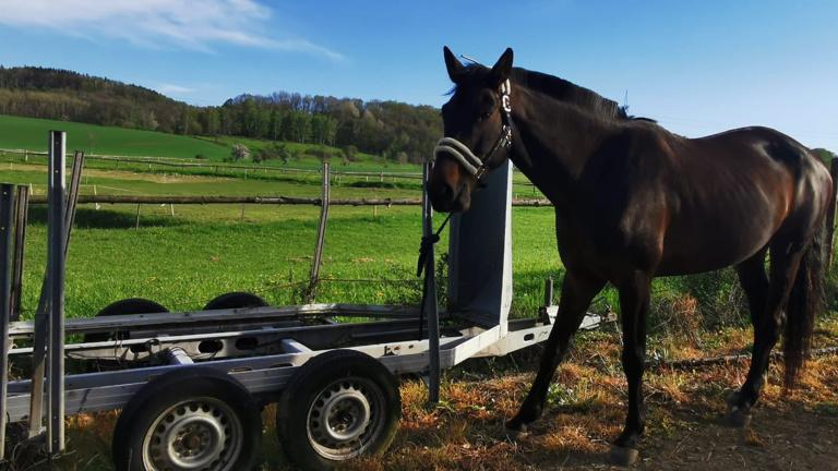 Unsere Pferde wollen wieder mit auf Turniere