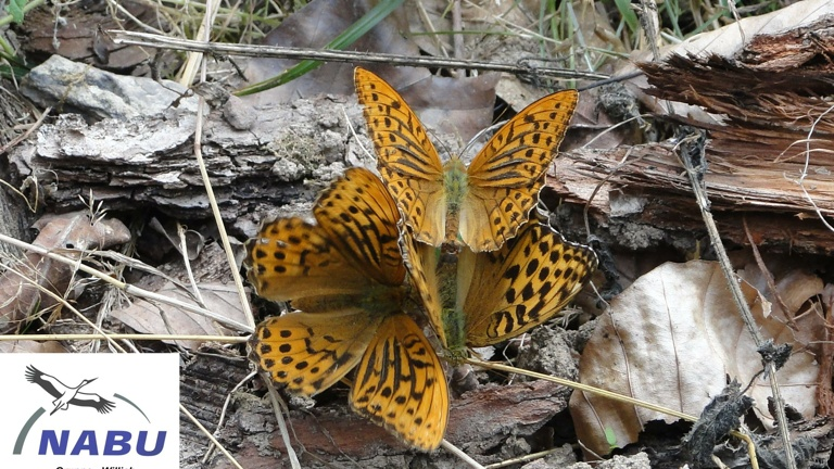 Schmetterlingsinsel