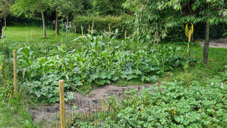 Geräteschuppen für Gemüseacker