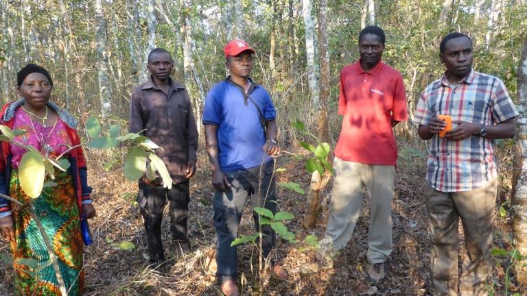 Ausrüstung für Imkergruppen in der Diözese Njombe/Tansania