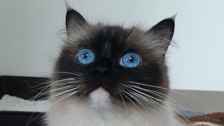 Katzenquarantäne für das Tierheim Hodenhagen