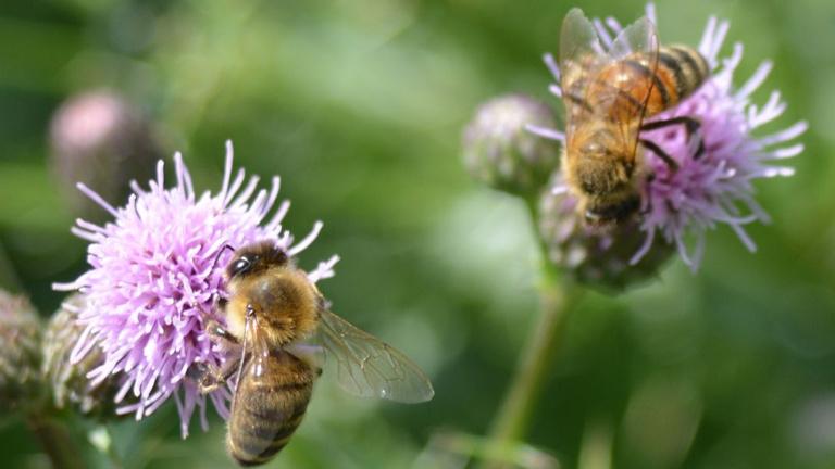 AufGEblüht! Blumen für Bienen 2021