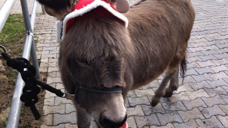 Futter für die Tiere der Jugendfarm Böblingen e.V.