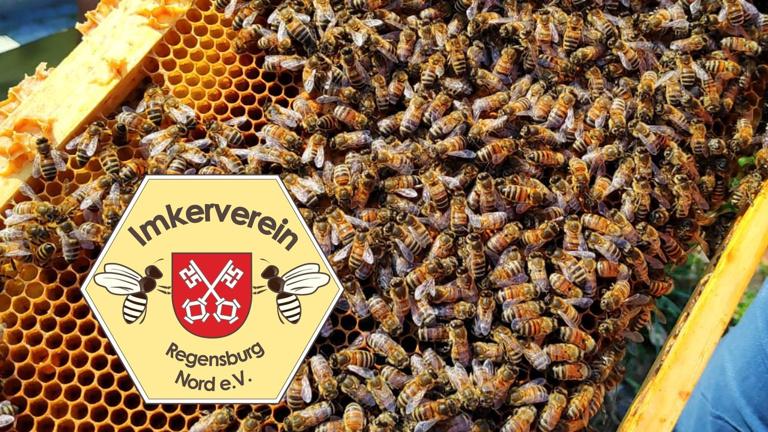 Lehrbienenstand an der Schillerwiese