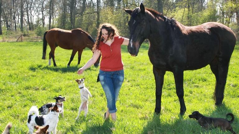 Tiere retten, heilen und vermitteln