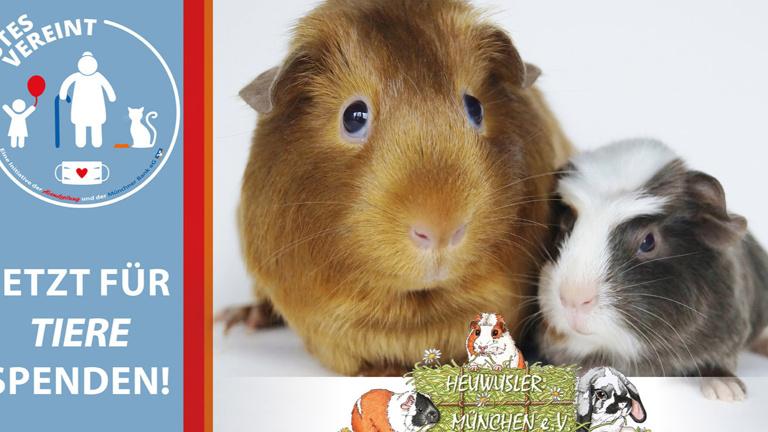 Tierarztkosten für 78 Notmeerschweinchen