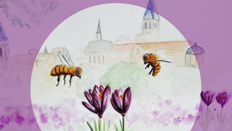 100.000 Krokusse für 1 Million Bienen