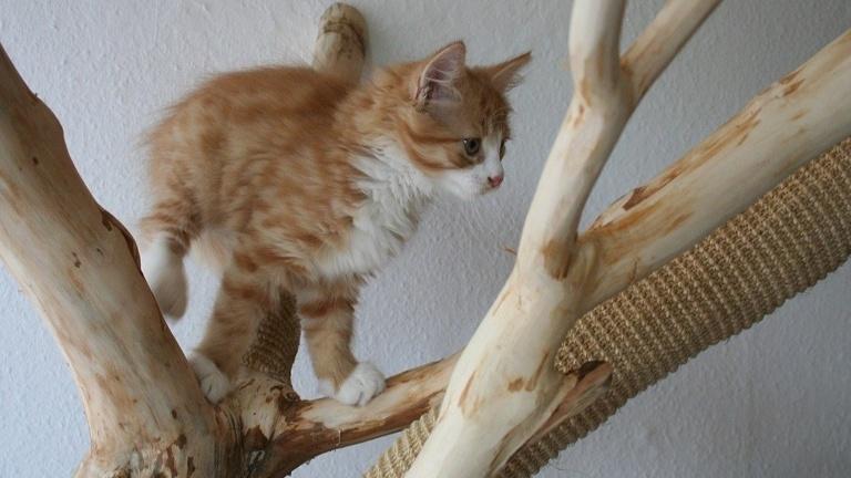 Kratzbäume für unsere Katzen