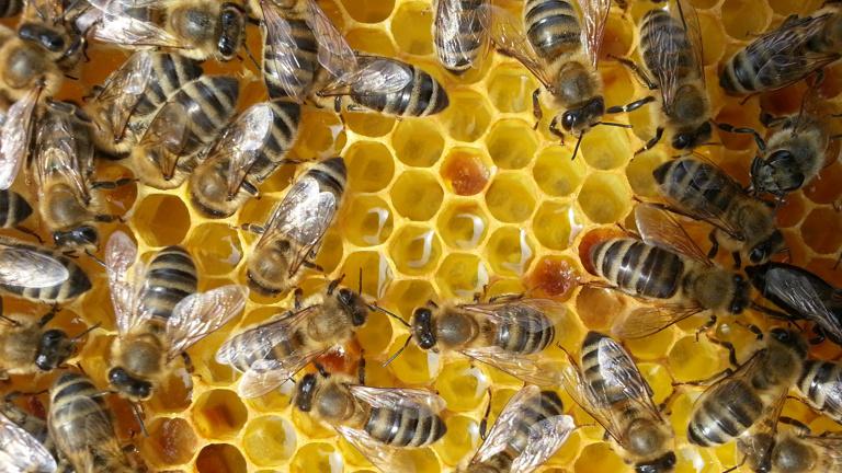 Neubau eines Bienenlehrstandes