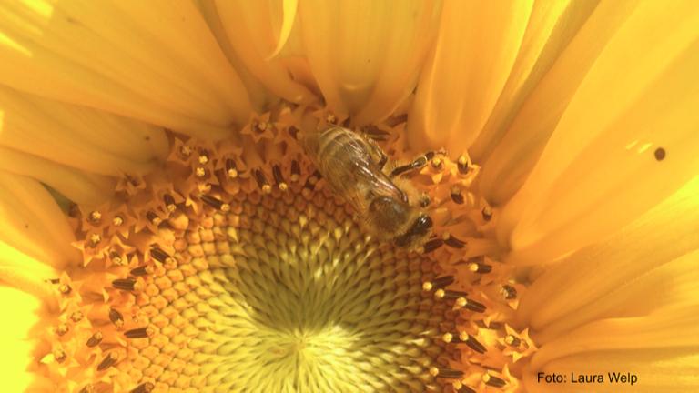 AufGEblüht! Blumen für Bienen