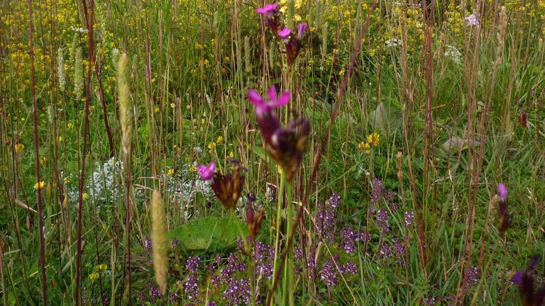 Blühflächen - Mehr Biodiversität für München