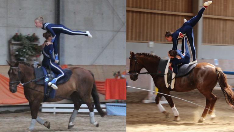 Neues Pferd für unsere Voltigierer