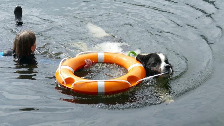 Ein Schlauchboot für den Hundesport