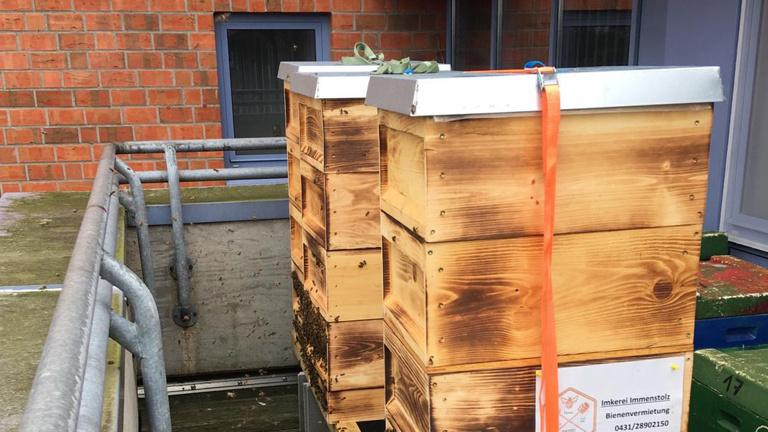 """Bienenvölker für """"Stadthonig"""""""